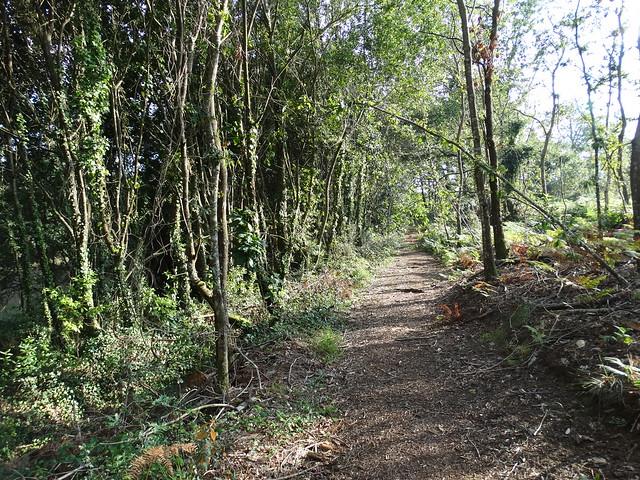 Sendero en la Ruta Ornitológica del Bosque Animado
