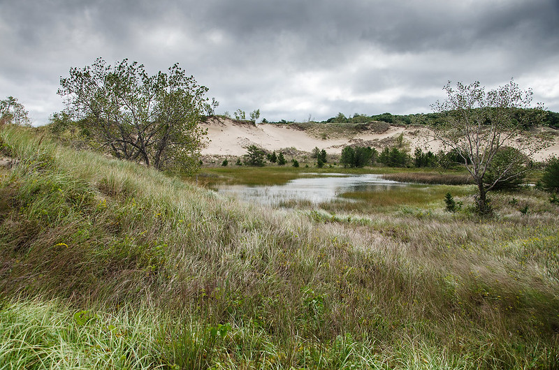 Interdunal Pond