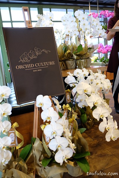ORchid Culture (10)