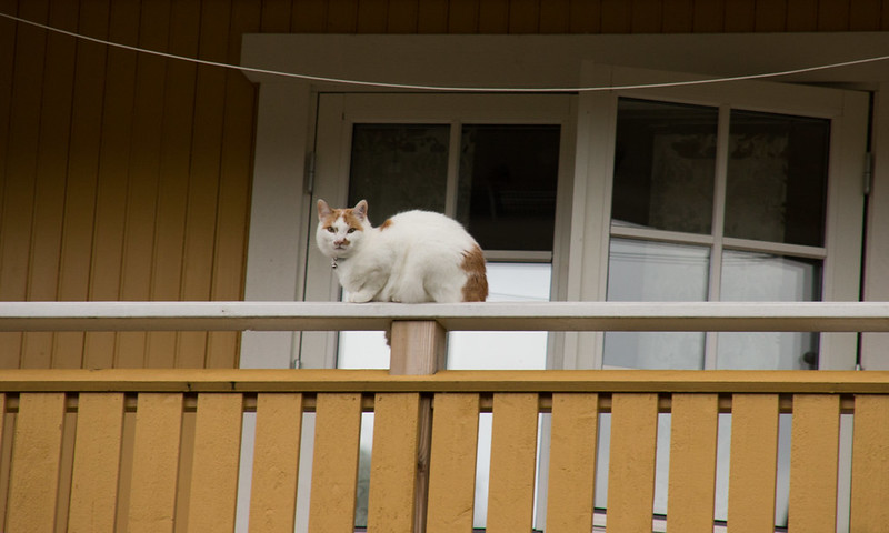 I'm watching you... (200 av 365 - Speja)
