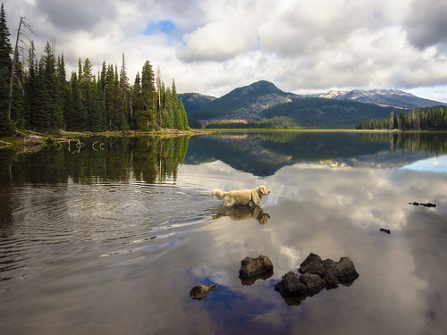 Goldenmirror at Sparks Lake