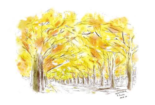 秋の北大イチョウ並木