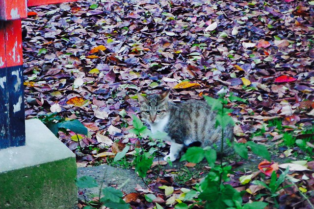 Today's Cat@2016-11-28