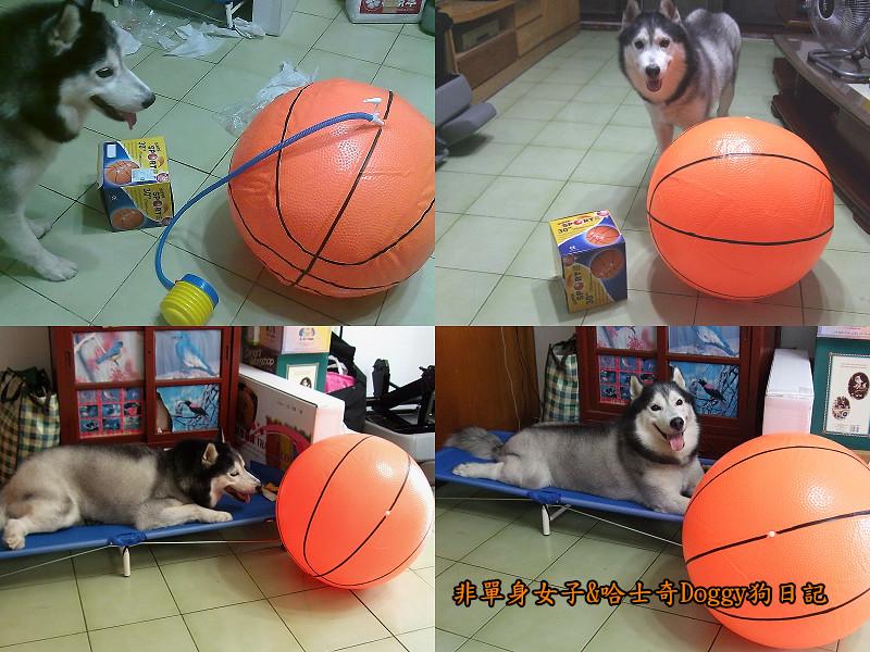 2012哈士奇doggy寵物玩具10大球