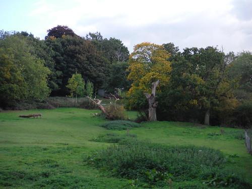 Meadow near Langdon Hill