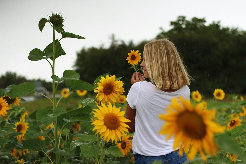 Sonneblumenfeld Alisha September 2015 288gimp