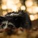 Time To Hibernate ? by pogmomadra
