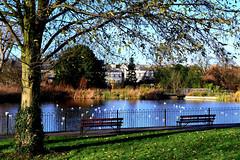 Brockwell Park / No 1 pond
