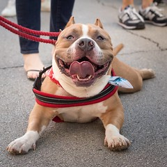 Hello to all the sexy people of the world! Let's see your best smile. Greetings from the Arts Goggle Festival in Fort Worth, Texas.   www.wildwonderment.com  #fortworth #texas #USA #america #dog