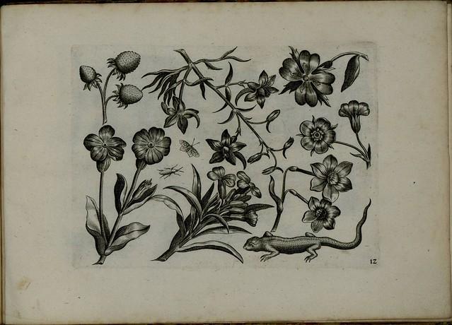 Viridarium Novum i