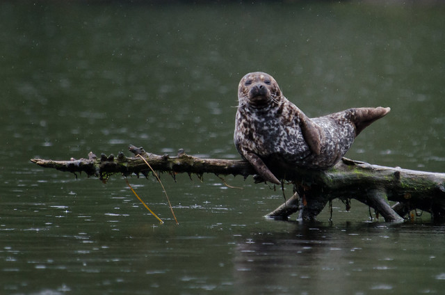 Stick & Seal