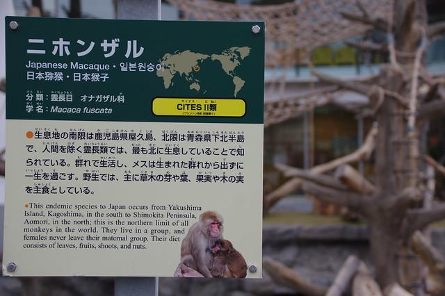 20151031円山動物園_08