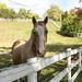 Oct1015 Hwy25 Horses IMG_3757 by Orkakorak