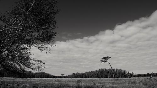 sky bw tree nature grass pine moss nikon wind florida farm meadow spanishmoss lonely prairie grayscale plains breeze drama bnw greenswamp d5300