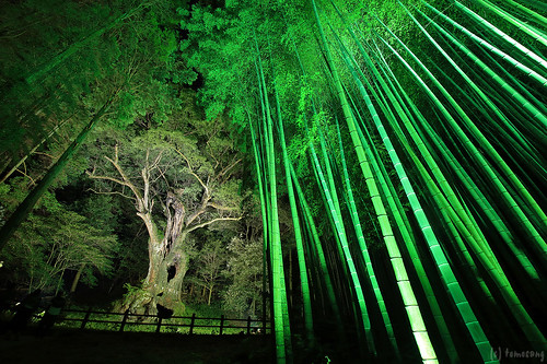 "the huge camphor tree ""Ohkusu"""