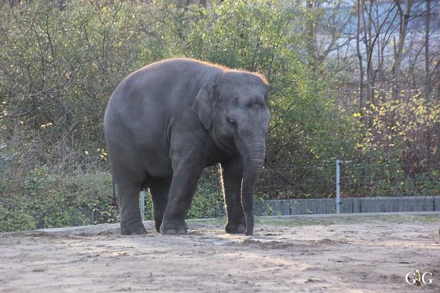 Besuch im Berliner Zoo 06.12.20151