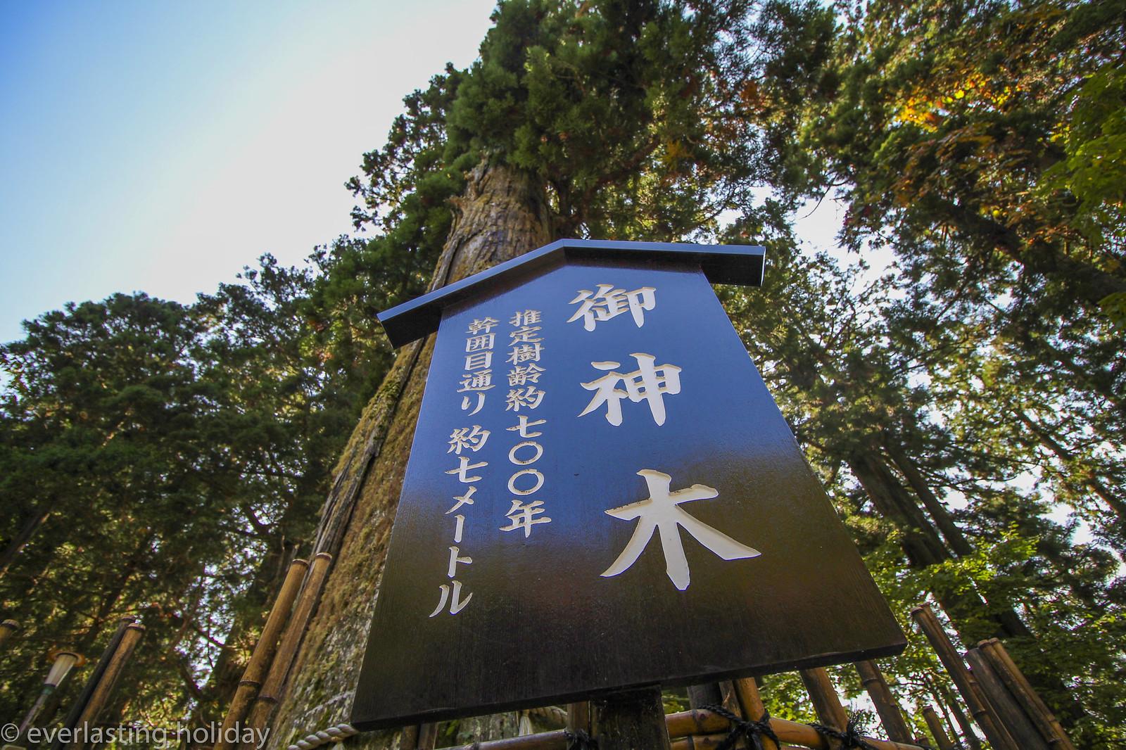 戸隠神社 Togakushi-jinja Shrine-0004