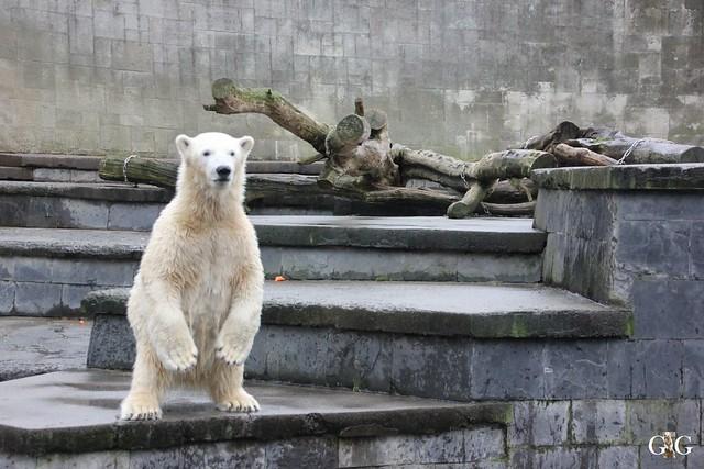 Besuch Zoo Rostock 29.12.20158
