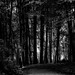 A walk through the woods, if you dare ! West Yorkshire. by Peter Dale Hosey