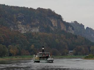Von den steilen, schroffen Abhänge an der Elbe bei Wehlen neigten sich ganze Bäume 00559