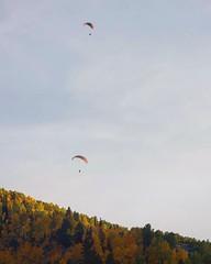 Gliding Through the Aspen Air // 400mm f/7.1 // #hanggliding #aspen #colorado #altitude #flight #gliding #mountains #rockymountains #forest #trees #aspens #vibrant #fall #colors #autumn #outdoors #landscape #sky #air