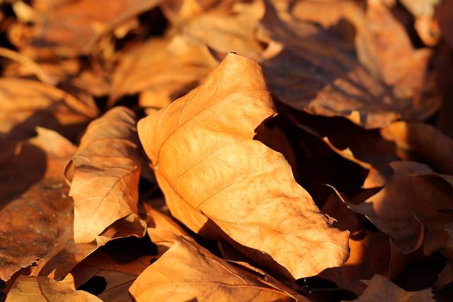 Herbstlaub im Humboldthain