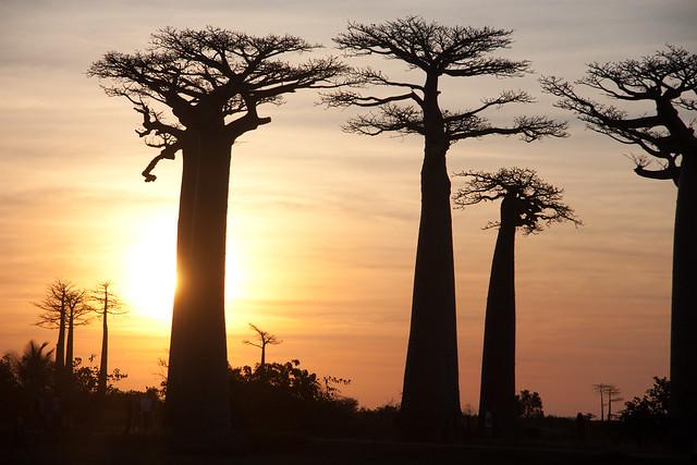 In Madagascar