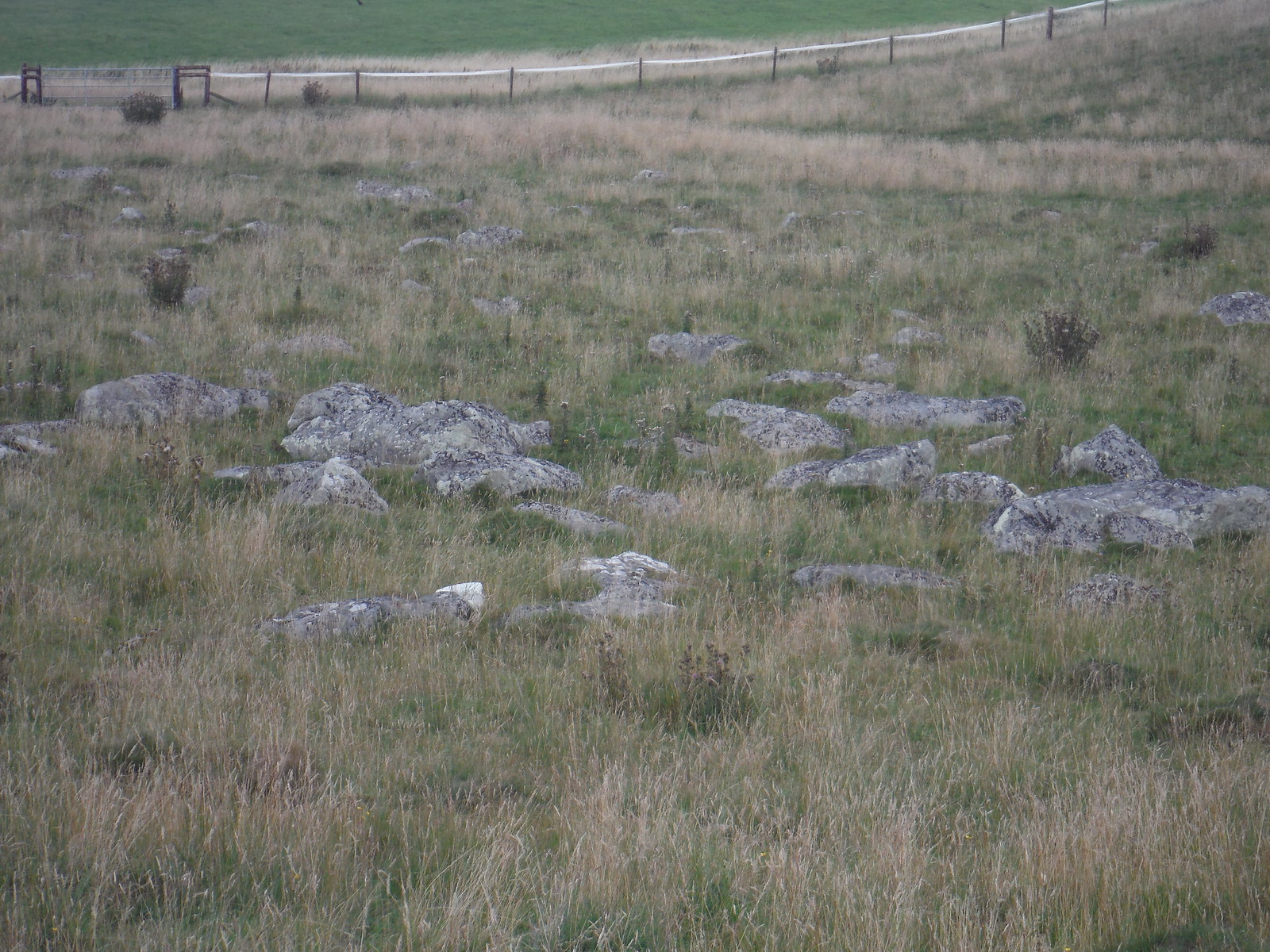 Fyfield Down Sarsen Stone Field, Detail SWC Walk 255 Pewsey or Marlborough Circular via Avebury