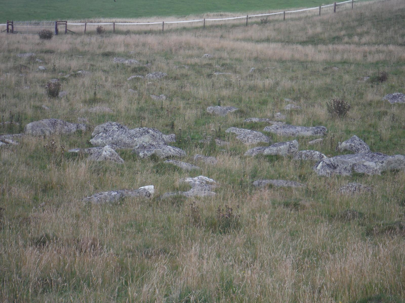 Fyfield Down Sarsen Stone Field, Detail SWC Walk 255 Pewsey or Marlborough Circular via Avebury