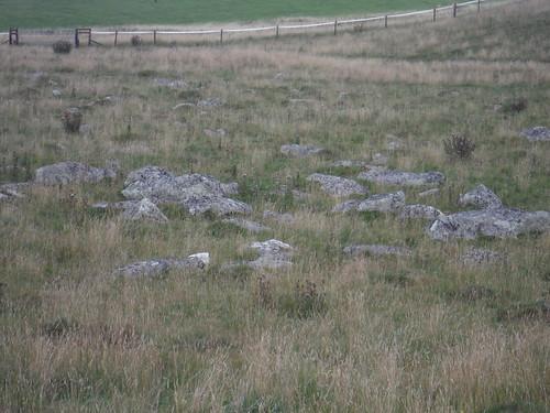 Fyfield Down Sarsen Stone Field, Detail