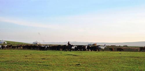 132 Viaje al oeste de Mongolia (22)