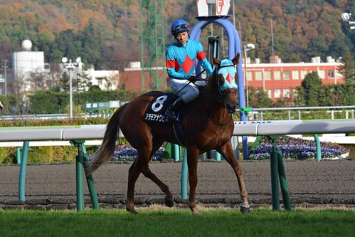 20151115福島10R 福島2歳S アラモアナワヒネ 返し馬へ
