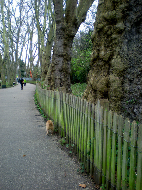fence and plane trees
