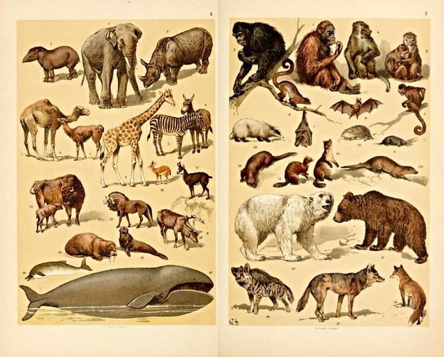 popular history of animals1