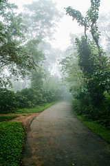 Misty morning, Coorg