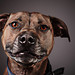Dog portrait by Brian Tomlinson Photography by Brian Tomlinson Photography