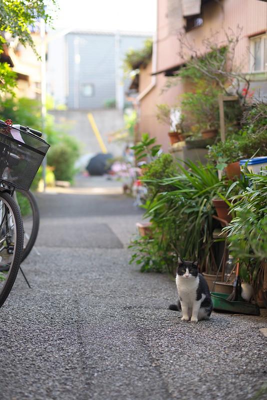 東京路地裏散歩 谷中 2015年9月22日
