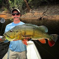 Gabriel Fucks com um belo tucunare, no fly a emoção é dobrada.  #pescaamadora #pesqueesolte #baitcast #fly #tucunare #pavone #pavon #peacock #peacockbass #monsterfish #anglerapproved #amazonia #amazon #pescaesportiva #sportfishing #tucunareazul #flyfishin