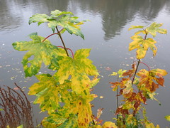 leaves against the river