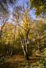 Autumn tree colour