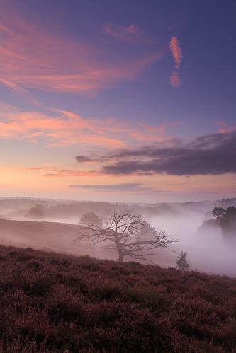 autumn mist netherlands fog sunrise nationalpark heath veluwezoom gelderland rheden