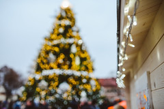 Kaunas Christmas Tree 2015