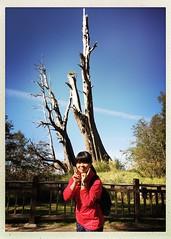 2015_11 塔塔加_夫妻樹 14