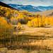 Lobdell Lake Rd_Eastern Sierra Meadow by Barking Dog Photos_Bruce Gregory