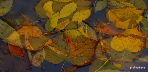 2016-10-27 at the pond, natural decay