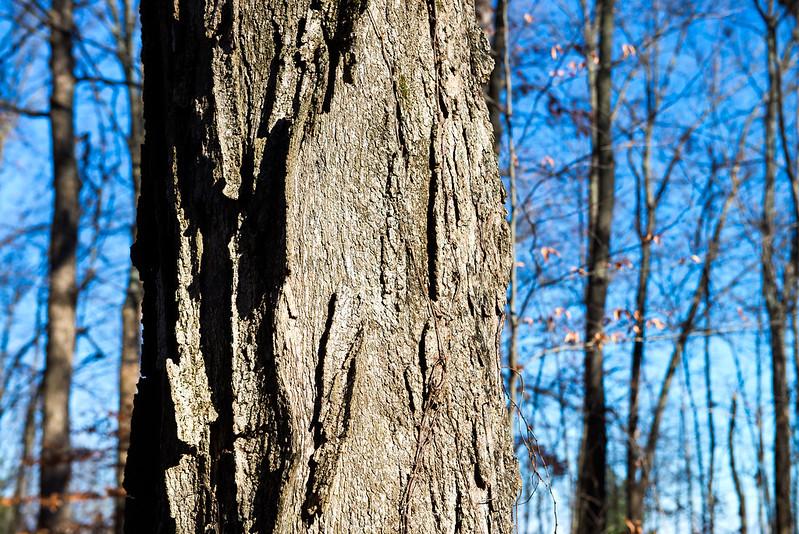 Ziegler Woods Nature Preserve - November 21, 2016