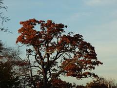 Brookside Preserve - Autumn (78)