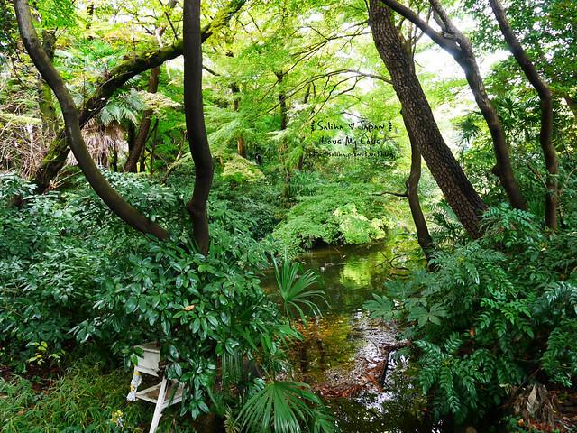 日本東京自由行新宿御苑庭園景點 (10)