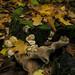 Composition-feuilles-et-champignons by Daniel Heikalo