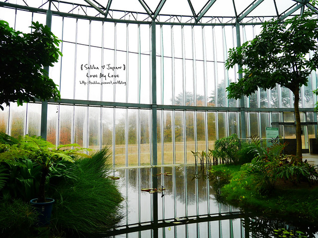 日本東京景點新宿御苑溫室植物 (23)